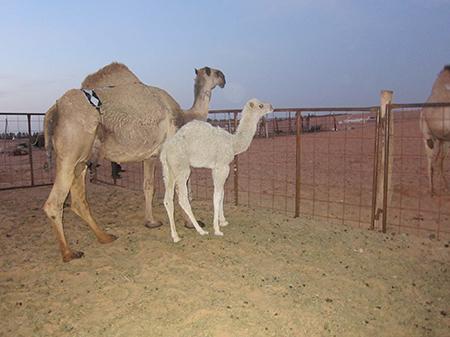 m17-webimg1900px-20130213-saudi-arabia-fdi-010