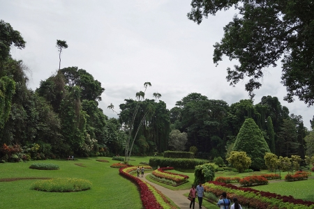 Peradenya Botanical Gardens, history dates as far back as 1371…